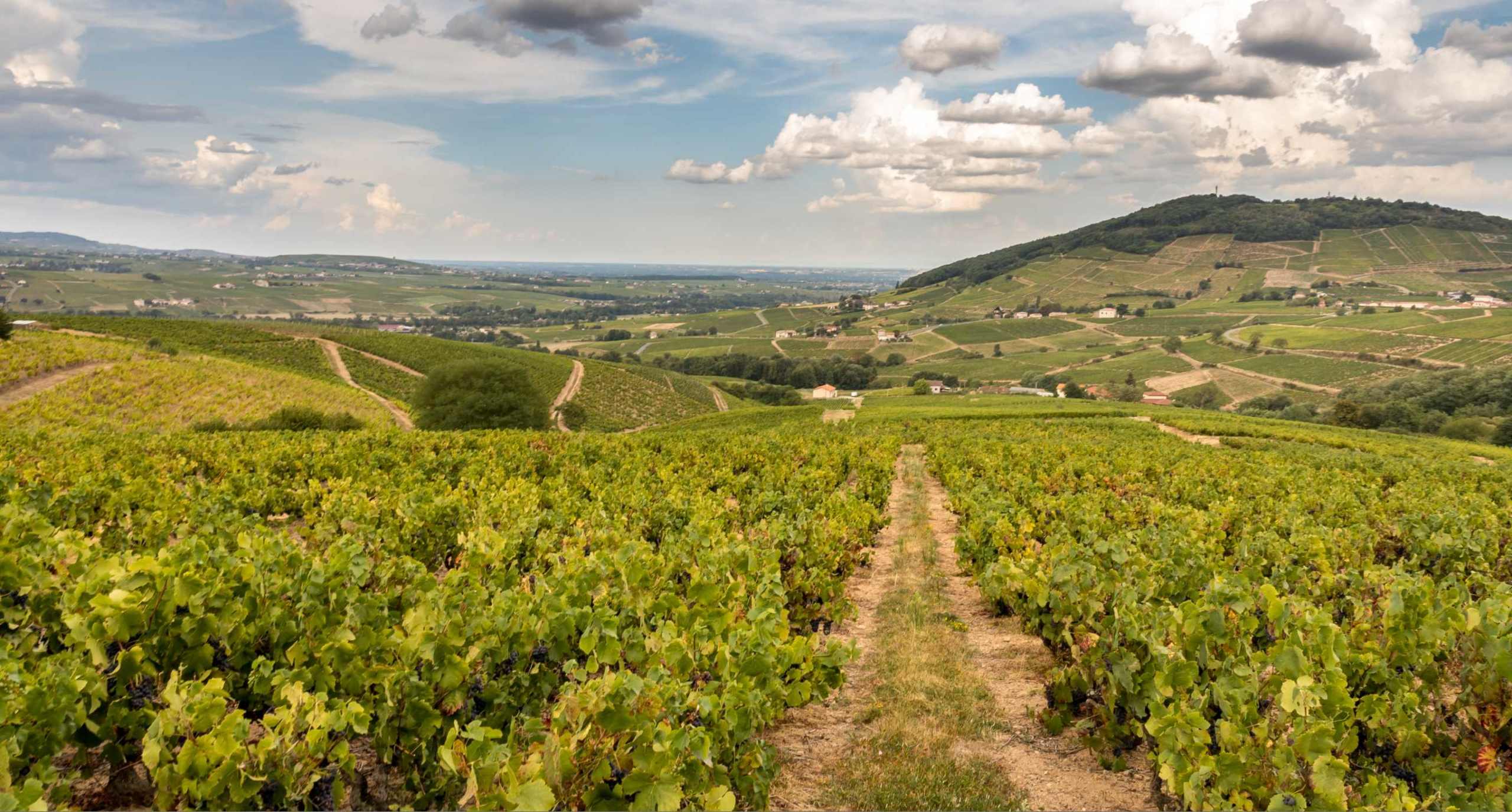 The Beaujolais region
