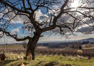 The Beaujolais vineyard: committed to environmental initiatives