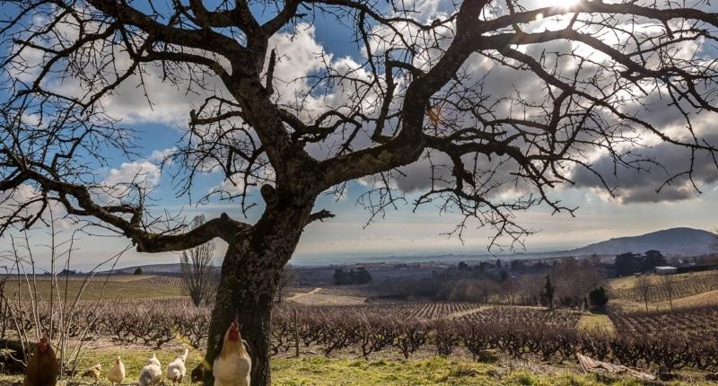 Le vignoble du Beaujolais, engagé dans les démarches environnementales