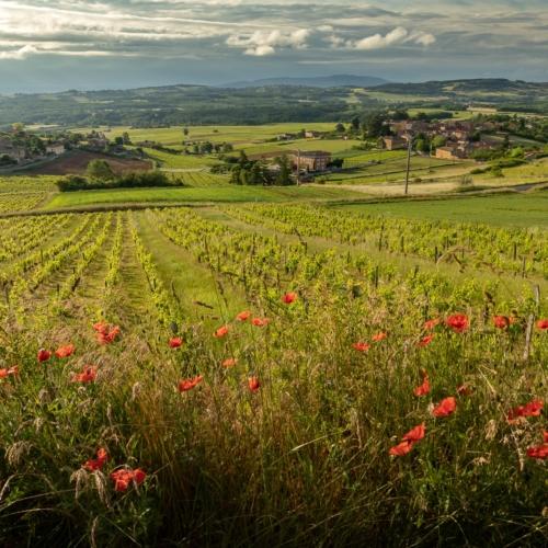 15 bonnes raisons d'aller dans le Beaujolais