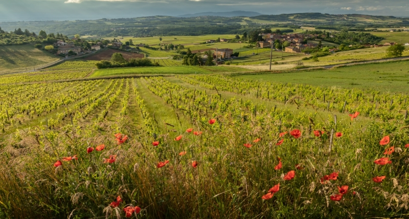 15 good reasons to visit the Beaujolais region