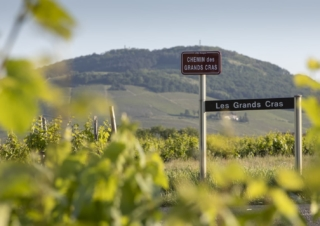 Beaujolais, accessible wines