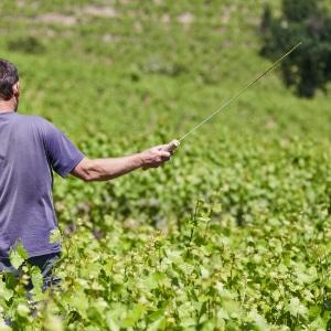 Travail de la vigne de printemps