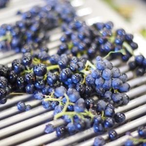 vinification-beaujolaise